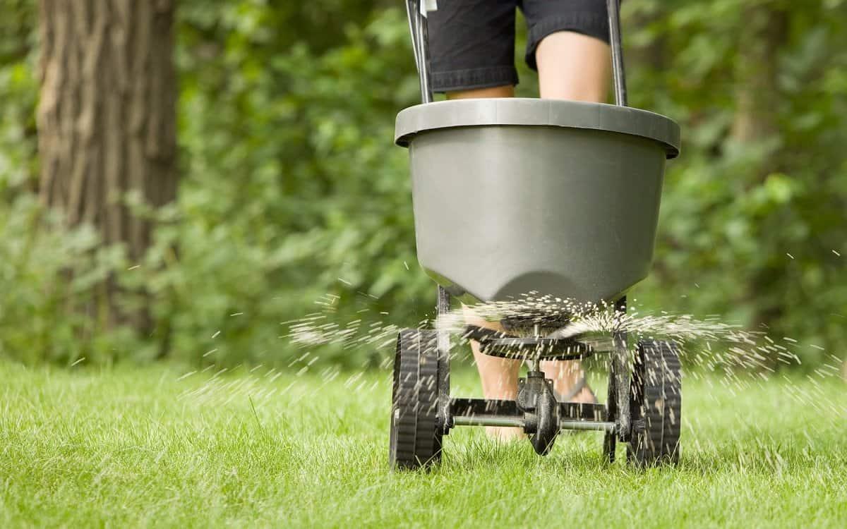 Обслуживание газона в Сочи