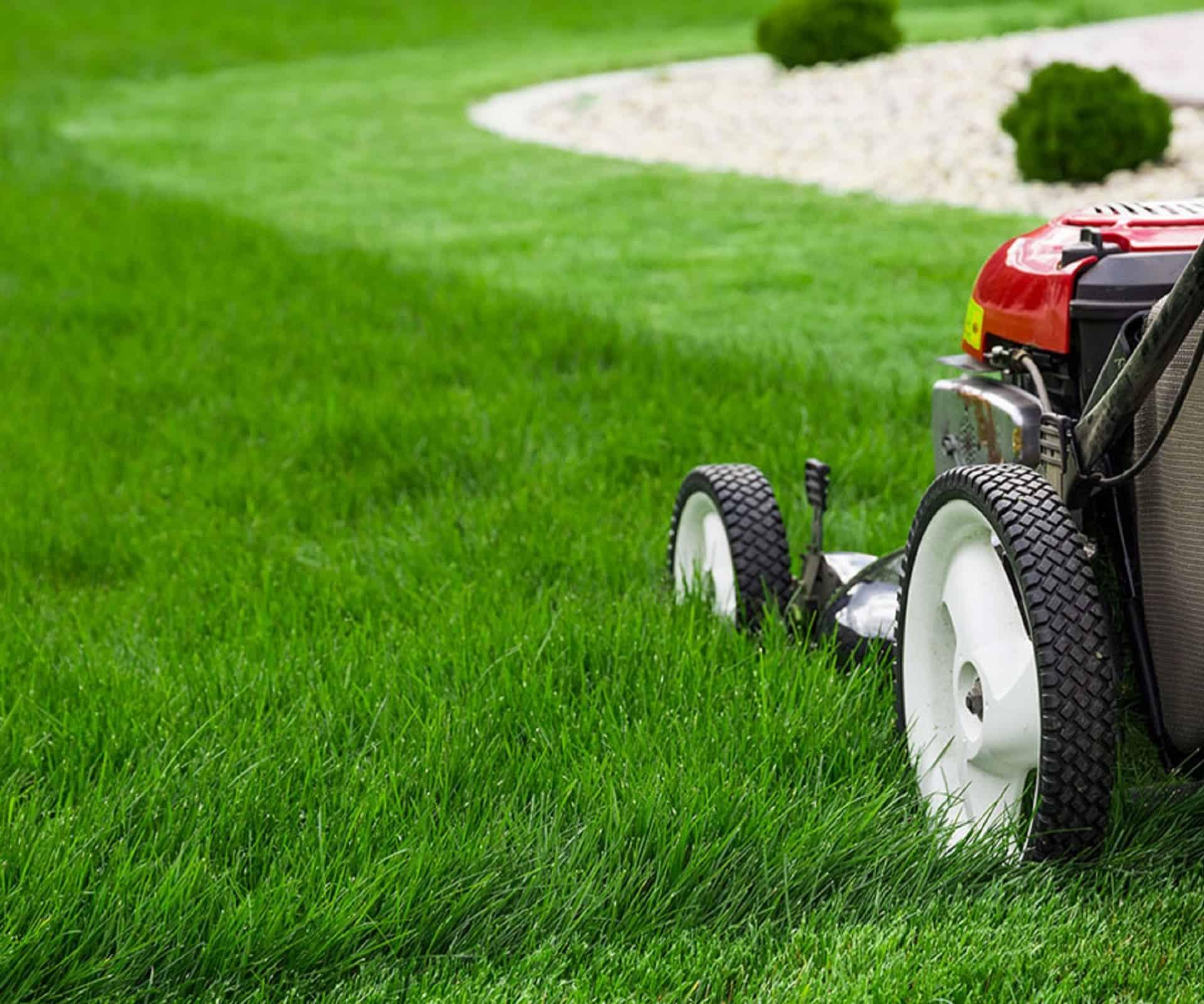 стрижка газонов в Сочи
