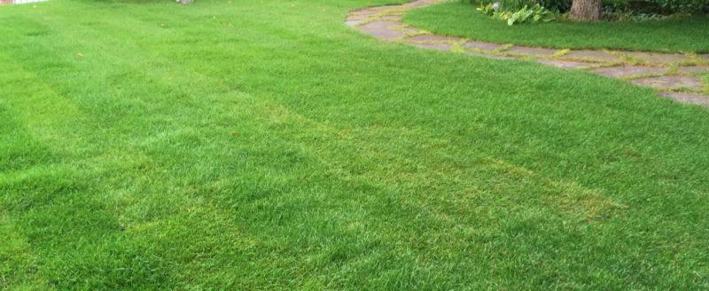 подстриженный газон в сочи