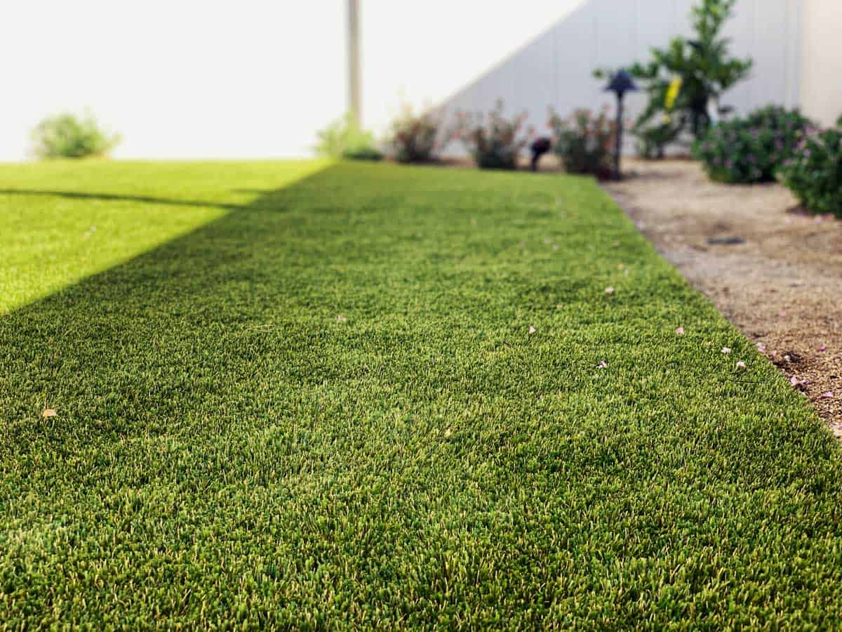 Рулонный газон Сочи